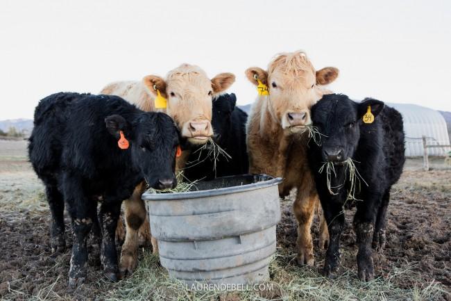 Becoming a Grass Fed Rancher! Part 1