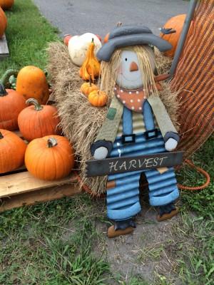 Halloween Harvest Guy