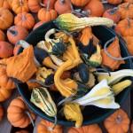 Halloween - Pumpkins & Gourds